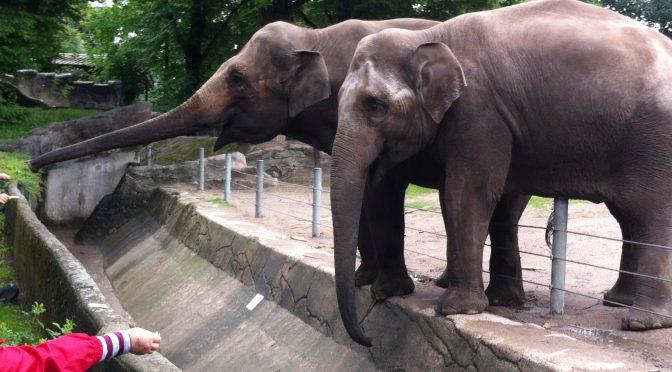 Ausflug zum Tierpark Hagenbeck